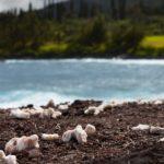 Dead Corals