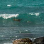 Surfing Turtle 2