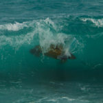 Surfing Turtle